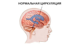 Нормальная циркуляция линквора